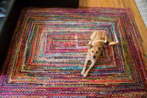 Dog Laying on Rug