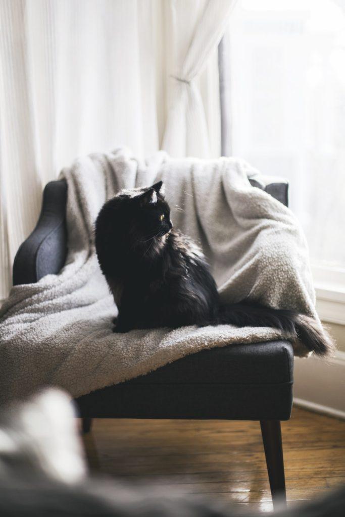 Cat on freshly washed sherpa blanket
