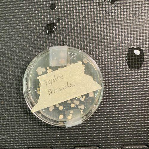 Hydrogen Peroxide agar plate test