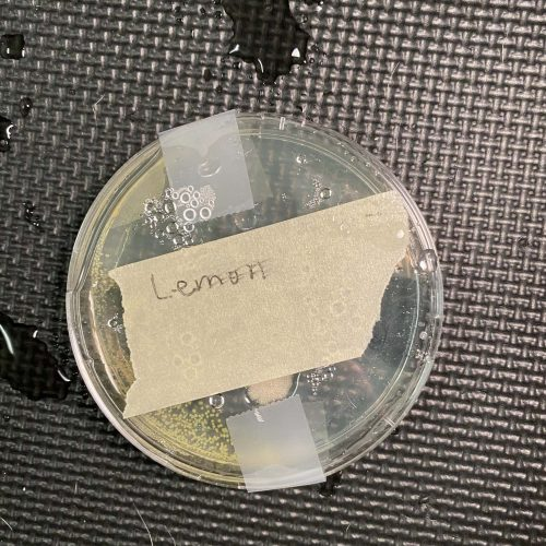 Lemon agar plate test