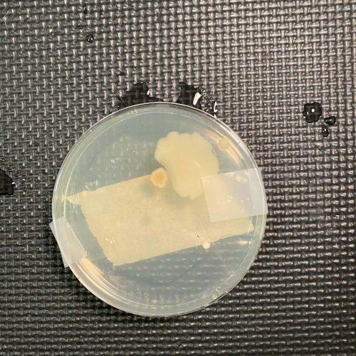 Baking soda & vinegar agar plate test
