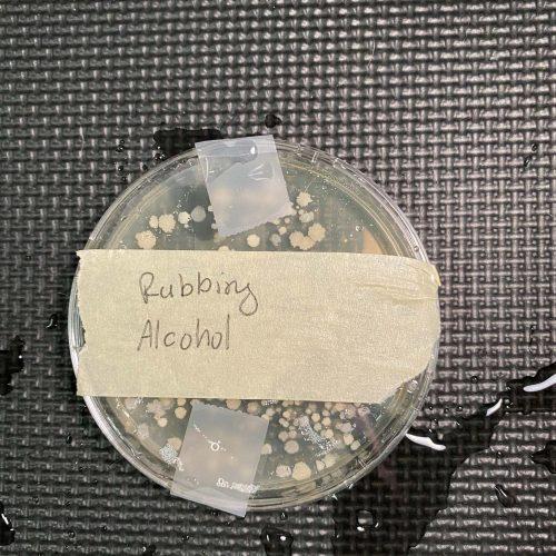 Rubbing alcohol agar plate test