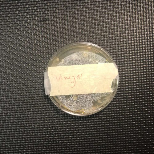 Vinegar Agar plate test