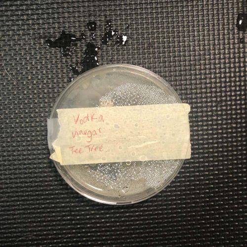 Witch hazel blend agar plate test