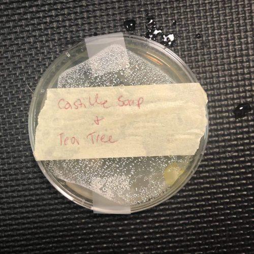 Castille soap and tea tree oil agar plate test