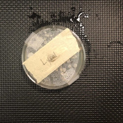 Lysol agar plate test